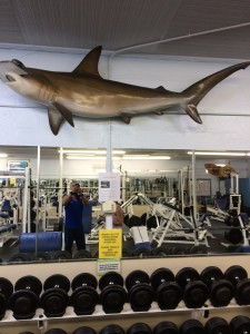 I wonder why they call it Hammerhead Gym?